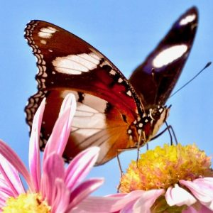 Family Counseling of Springfield VA butterfly